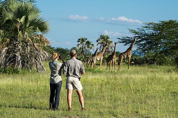 African Safari - Spotting Masai giraffe during a walking safari at Lake Manyara National Park, Tanzania. © Africaimagelibrary.com