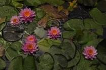 Roayl Botanic Gardens