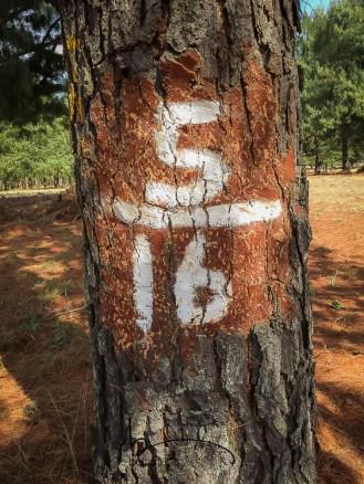 Sappi tree identification