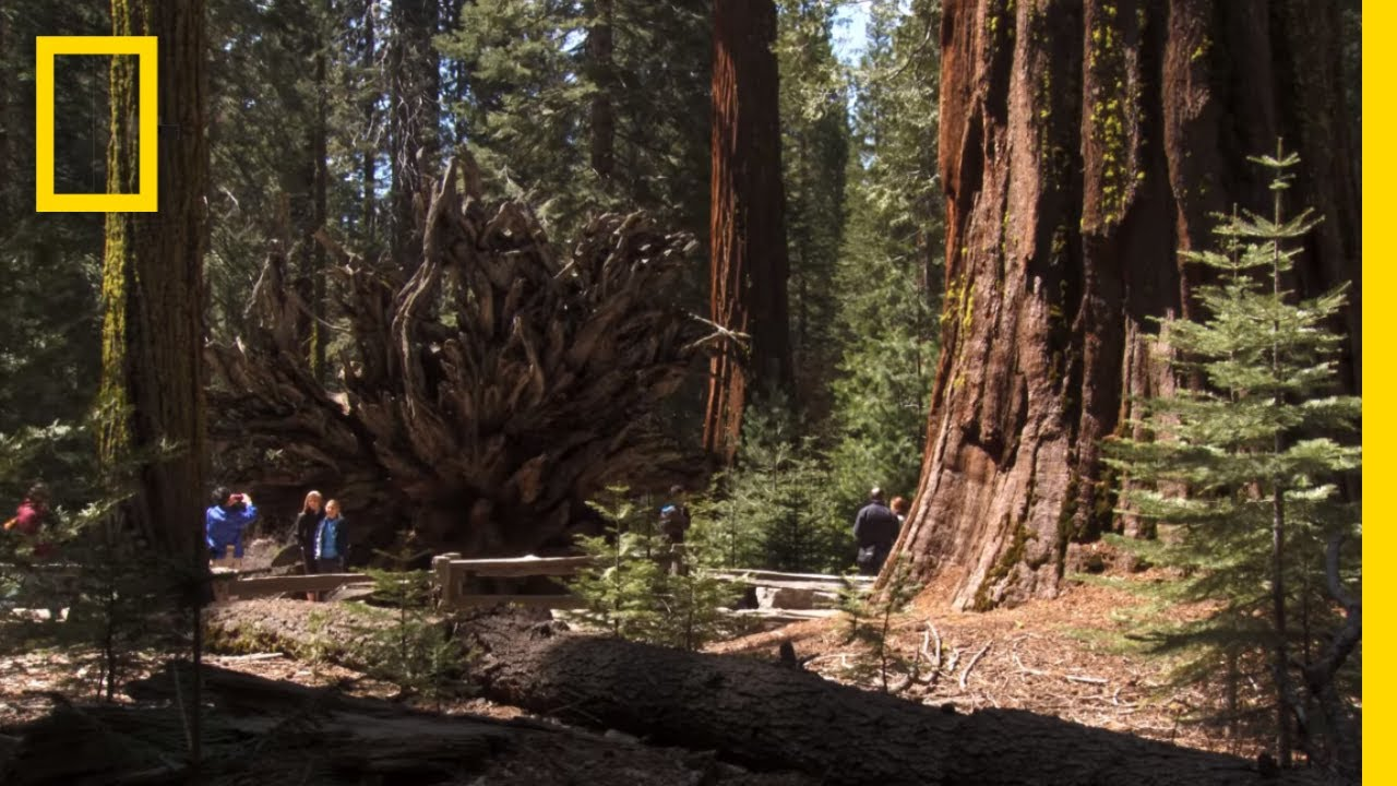 Video: 5 Must-See Things in Yosemite National Park
