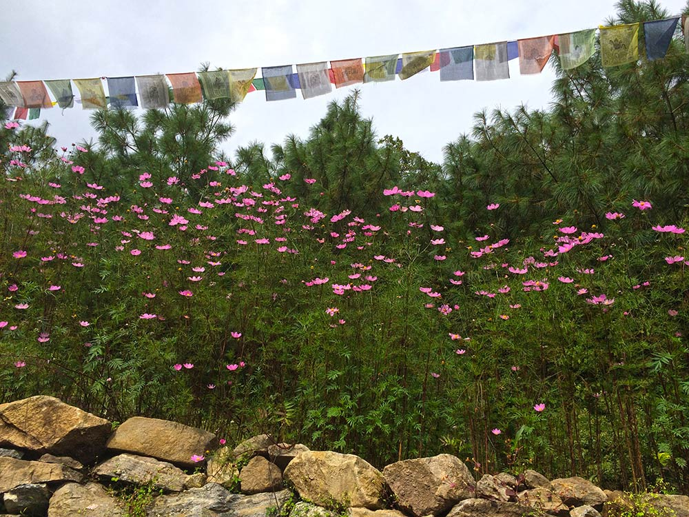 Prayer Flags and Flowers along the Everest Base Camp Trek