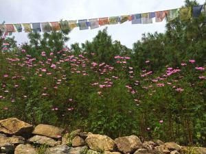 Prayer Flags and Flowers along the Everest Base Camp Trek