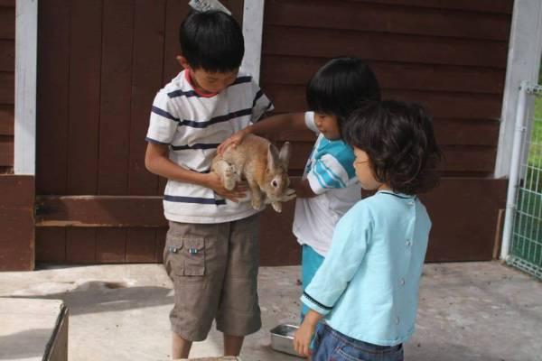 ウサギと触れ合う写真