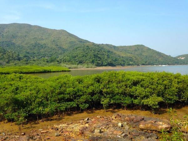 マングローブ林の写真