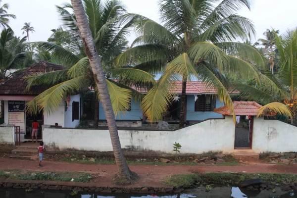 ヤシの木と家の写真
