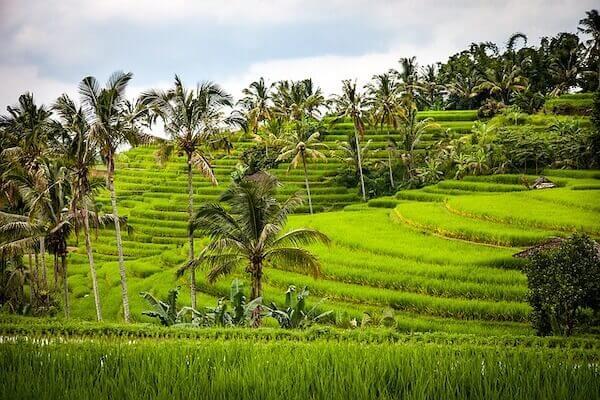 バリ島の田園風景写真