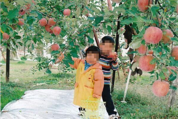 塩崎農園の写真