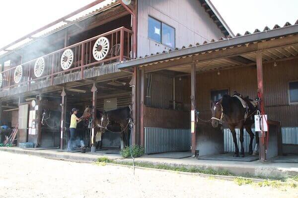 馬小屋の写真