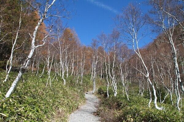 三角池途中のハイキングコースの写真