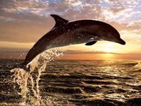 dolphin-excotic