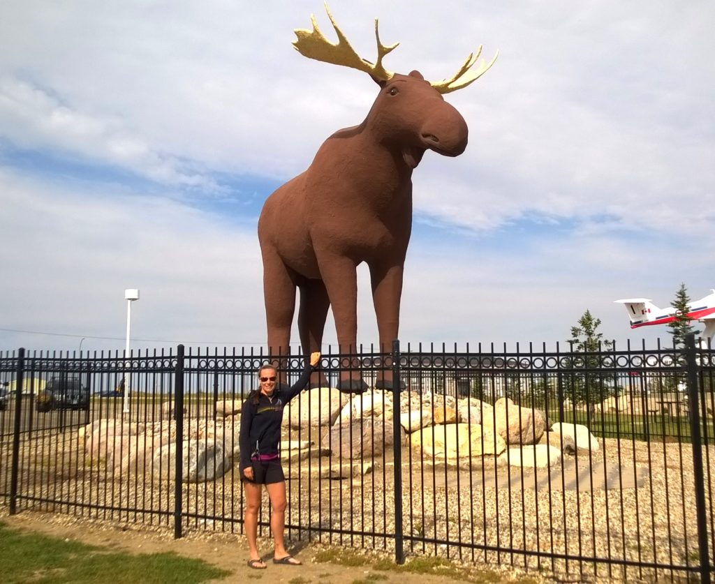 The moose of Moose Jaw, Saskatchewan.