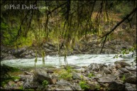 Forest_Branches_River_Selway