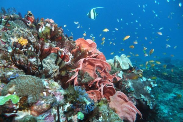 Stunning 2 mile reef