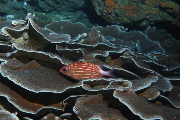 Taking a break in lettuce coral