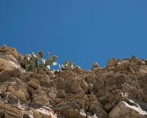 DSCF2225 cactus hot springs