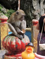 Batu Caves are famous as a Hindu shrine, but they also have monkeys!