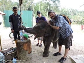The baby elephant! Just playing with this guy made the extra tour worth the money.