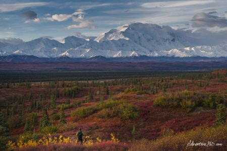 Into the wilderness - Denali National Park - Alaska Landscape Photography