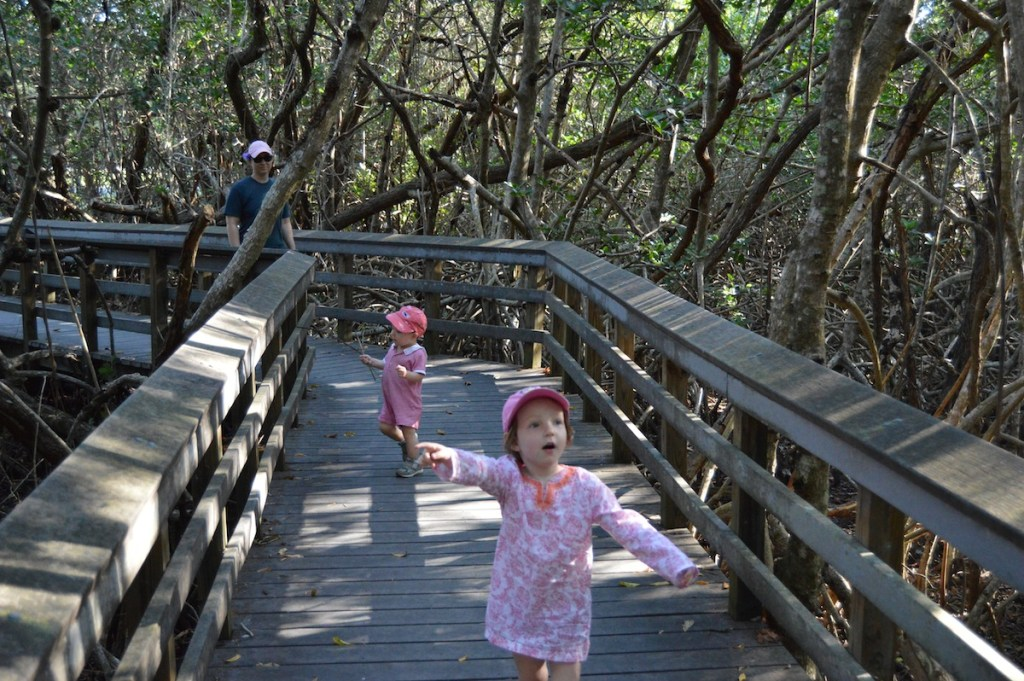 A boardwalk stroll at Mahongany Hammock, Everglades