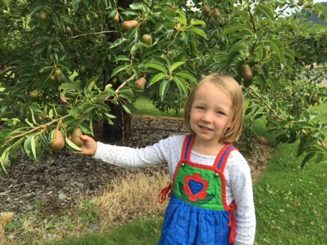 Pear season is next! YUM!