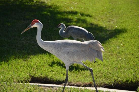 Sandhill cranes. Ellen Lindner, AdventureQuilter.com