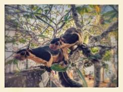 Kennismaking met twee giant squirrels op bootsafari