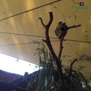 Hamilton Island Koala Wildlife Park