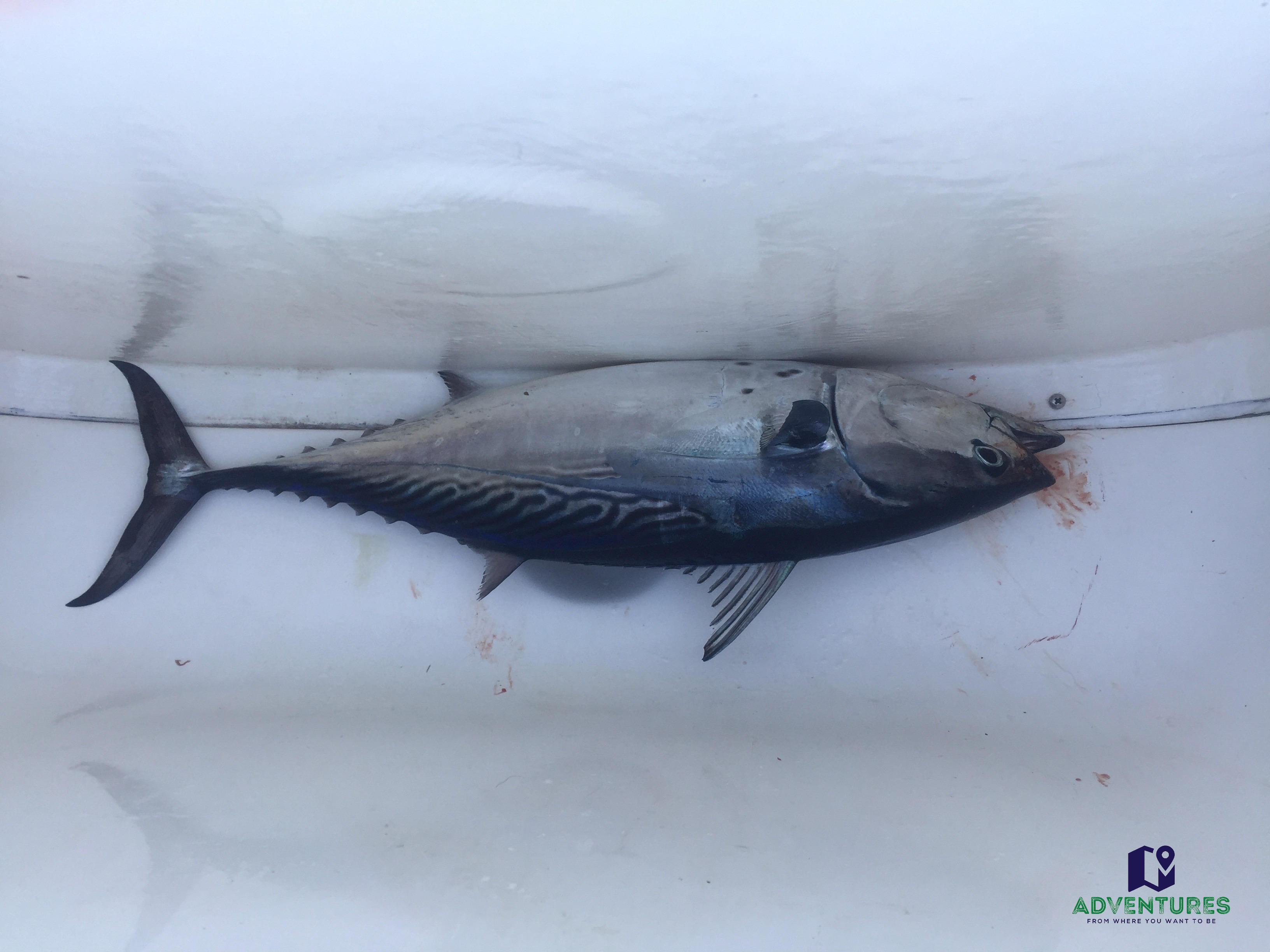 Whitsunday Fishing charter