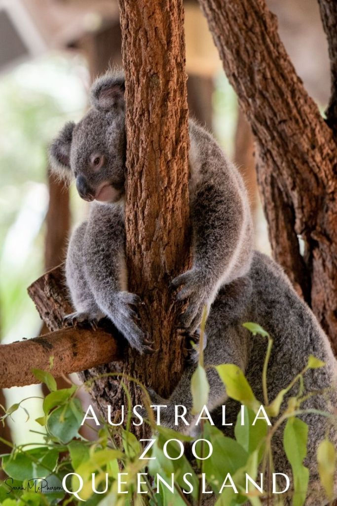 Located near the iconic Glasshouse mountains, on the Sunshine Coast is the iconic Australia Zoo.   Come find out why Australia Zoo is a must see on your next trip to the Sunshine Coast