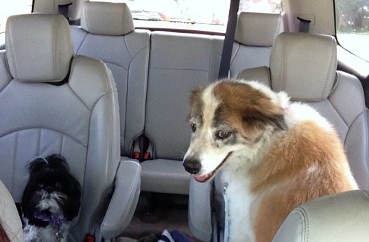 Car Ride to the Dog Park