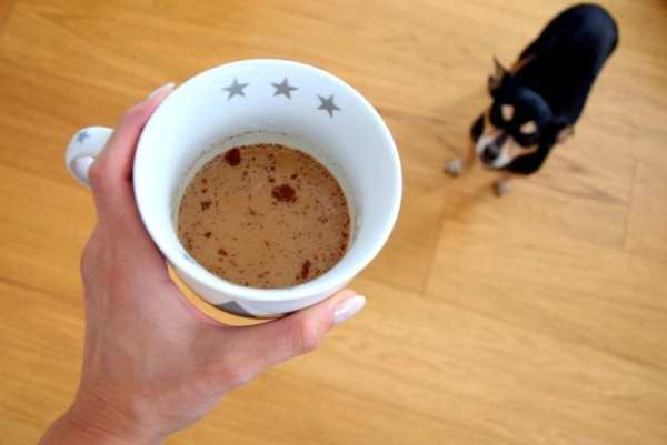 Can Your Dog Drink Coffee from North Carolina Lifestyle Blogger Adventures of Frugal Mom
