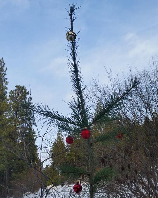 Throwback Thursday – The Solstice Tree