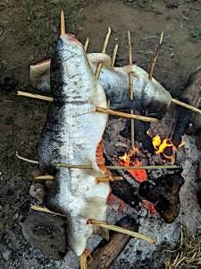 roasting steelhead