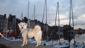 Jazz's first visit to Honfleur - poser