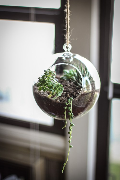 Planters for the Home Hanging Succulents Ribbon Greenery Plants Water Sun Window