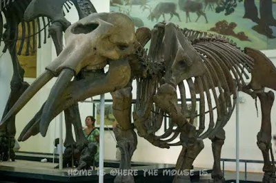 Does American Museum Of Natural History Open On Thanksgiving