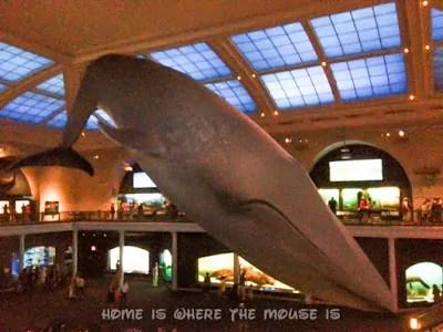 Blue Whale Model | AMNH
