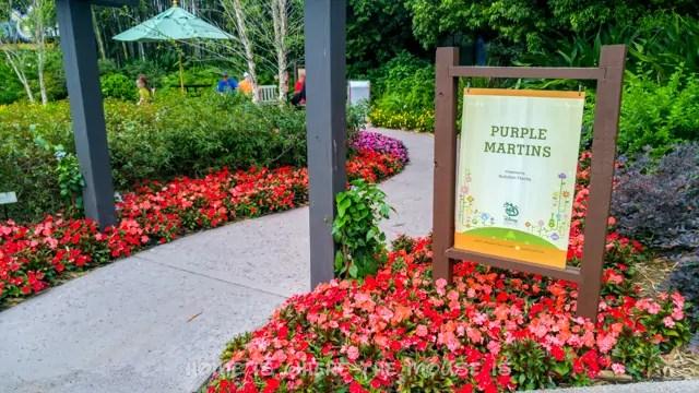 Purple Martins Garden at the Epcot International Flower & Garden Festival