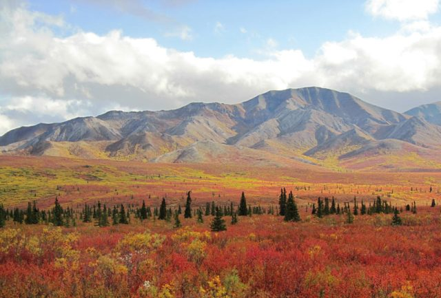 Denali National Park Fall Colors