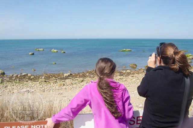 Bella and Lisa watch the seals at Montauk Point Seal Haulout