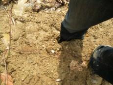 Stuck in Landslide material, Gorge Metro Park, Akron, OH
