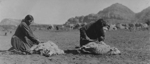 Sheep shearing southern Navajo agency 1933. http://tskies.com/sheep-is-life-the-story-of-the-navajo-and-the-churro/