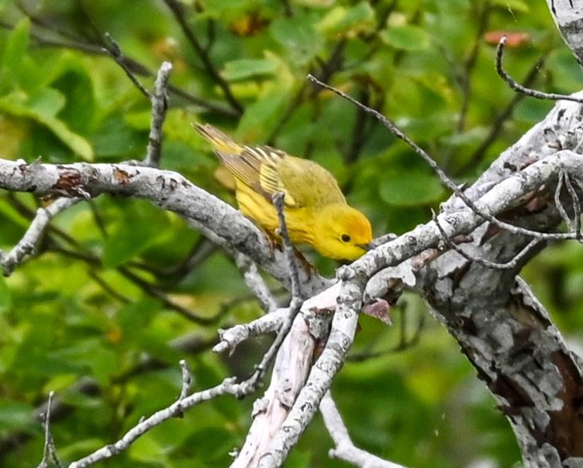 Where to find birds in Rhode Island