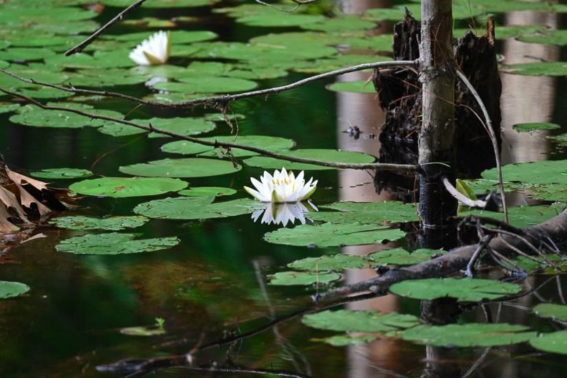 nature at Walden Pond