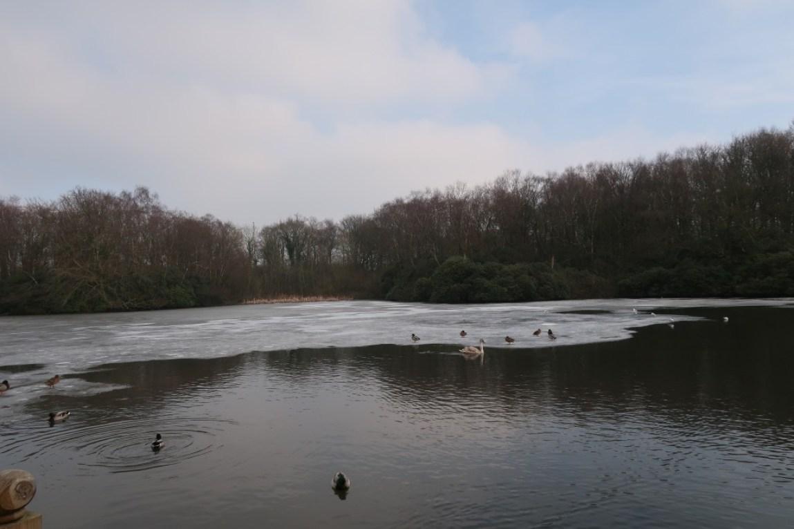 frozen lake with ducks