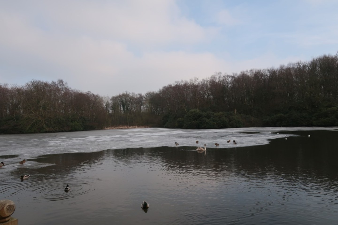 frozen lake with ducks
