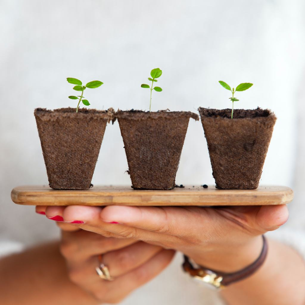 womans hand holding 3 potted seedlings