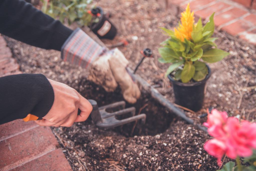 hands planting flowers in the soil