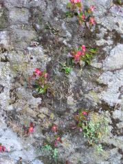 begonias growing out of wall