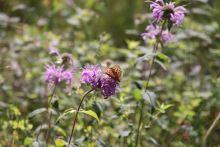 IMG_5702 butterfly purple